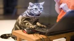 Védtelen Wifi-hálózatokra vadászik a macska kép