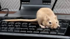 Így helyettesítsd az egeret egy billentyűzettel kép