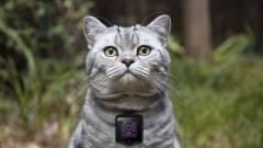 Így csinálj geeket a macskádból kép