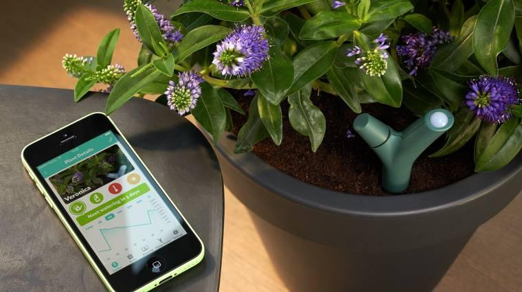 Parrot Flower Power: a növények álma kép