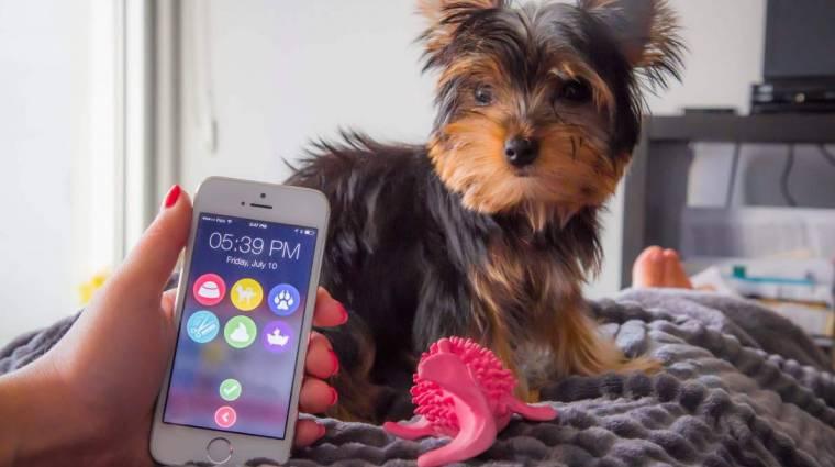 Ez az app szól, ha nem etetted meg a kutyád kép