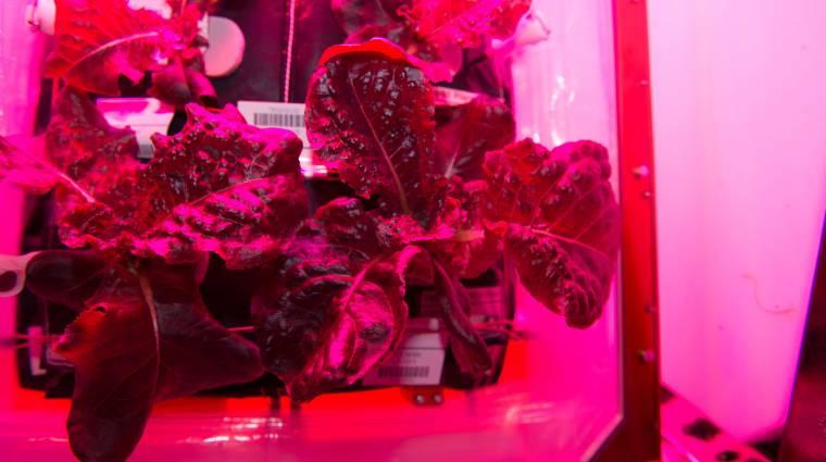 Űrben termesztett salátát eszik ma az ISS legénysége kép