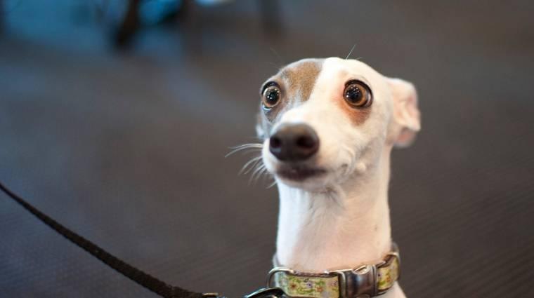 Motorola okosnyakörv kutyáknak kép