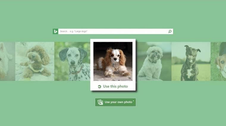 Már a kutyafajtákat is azonosítja a Microsoft kép