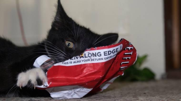 Edge böngészővel érdemes Netflixet nézni kép