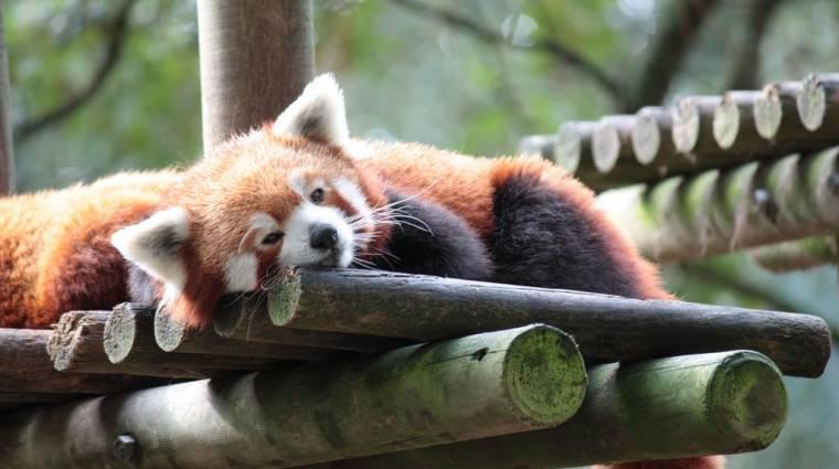 Linux: beépülőmentes Netflix a Firefox 49-től kép