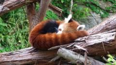 Csúszik egy hetet a Firefox 50 kiadása kép