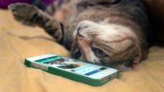 Lekapcsolja a Vine videós szolgáltatást a Twitter kép