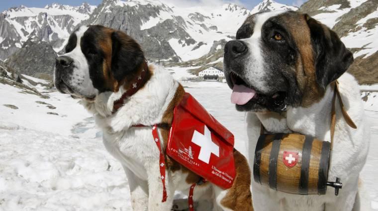 Drónok segítik a svájci mentőkutyákat kép