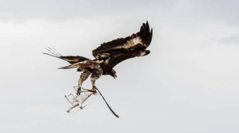 Sasokat képez ki drónelhárításra a francia légierő kép