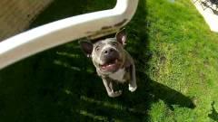 Szerinted szétszedi a kutya a csomagszállító drónt? kép