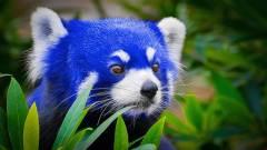 A Firefox Quantum kétszer gyorsabb, mint a Firefox 52 kép