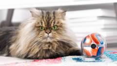 A háziállatoknak is szólt a CES kép