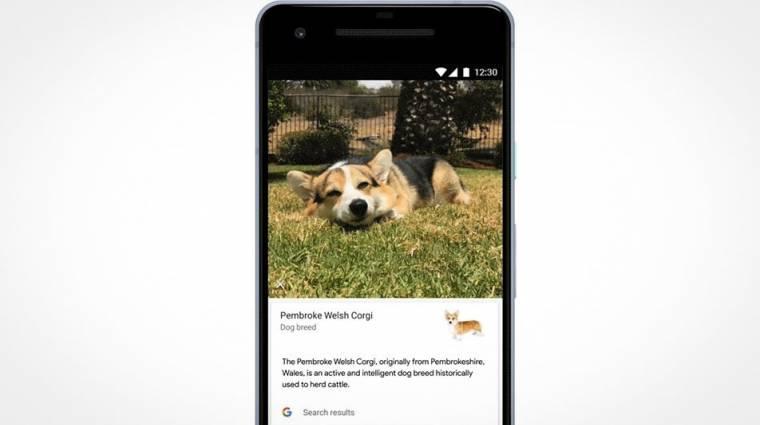 Már a kutyád fajtáját is felismeri a Google kép
